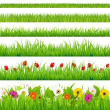 Duży zestaw trawy i kwiaty