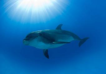 Dolphin and Sun