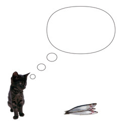 Pubblicità gatto