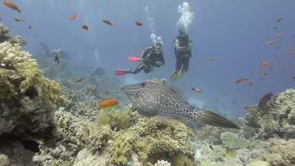 Two Scuba divers observing coral reef