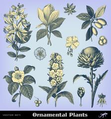 Engraving vintage plant set.