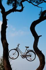 Bike on the tree