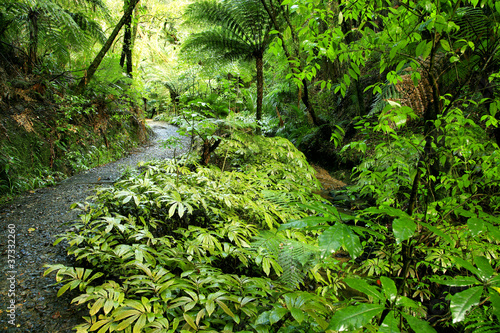 Fototapete urwald  Fototapete Regenwald - Bewuchs - Wald - Pixteria