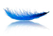 Blue feather with reflection