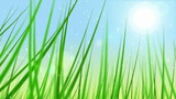 Loopable grass animation.