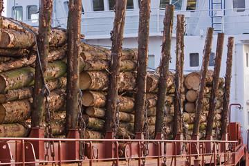 A shipload of spruce (picea) dockside UK