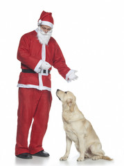Babbo Natale premia un golden retriever