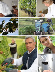 Wine production collage