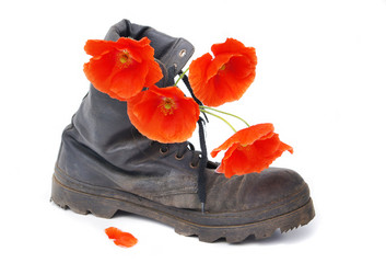Old army boot and red poppy flowers in it