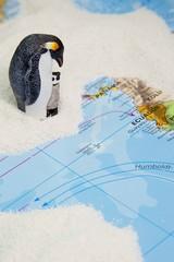 Pinguine auf den Galapagos-Inseln und der Panama Kanal
