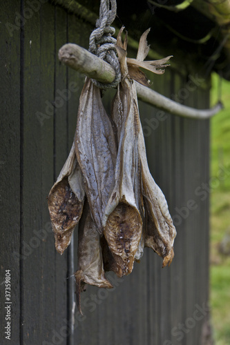Stockfish hanging outside house