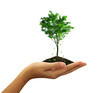 Growing green tree plant in a hand isolated on white background