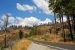 alberi secchi - yosemite