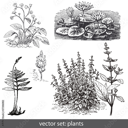 vector set: plants - flowers