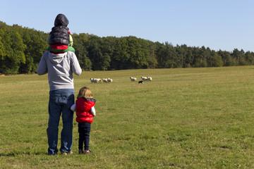 Vater und seine Kinder beobachten rennende Schafe