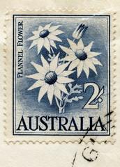 "Vintage australian stamp ""Flannel Flower (Actinotus helianthi)"""