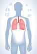 Human lung