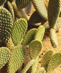 Detail of cactus growing in the garden.