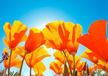 Champ des fleurs avec Blue Sky, Vue Macro