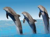 Delfine Freigestellt