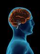 Brain 3D unfaded transparent