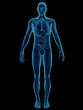 Human Body & Organs