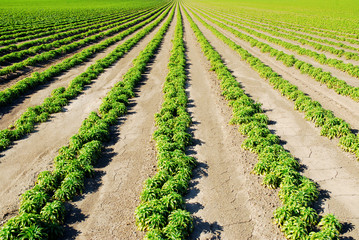 Green field in Northern California