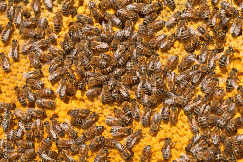 bienenvolk lagert honig in waben ein von vielfalt lizenzfreies foto 37425463 auf. Black Bedroom Furniture Sets. Home Design Ideas