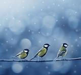 Fototapeta śnieg - tło - Ptak