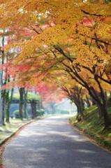 姫路城 姫山公園の紅葉