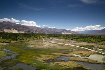 Breathtaking green swamp landscape in Leh, North India