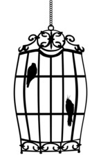 two birds in cage isolated on white