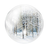 winter forest in bubble