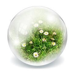 daisies inside sphere