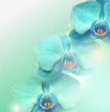 Fototapety flower Orchid background