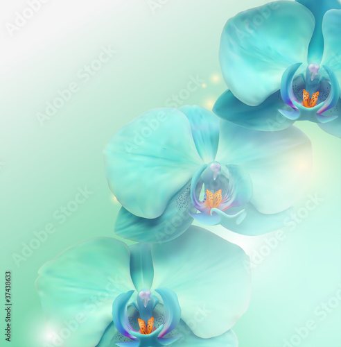 Blume Orchidee Hintergrund