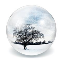 snow tree in bubble