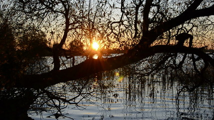autumn evening sunset in the lake and  tree