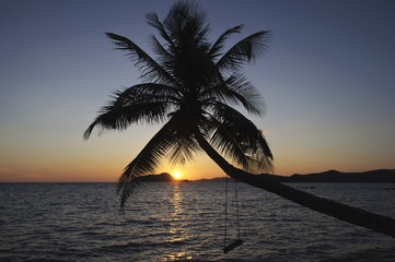 swing on a coconuttree by sunset