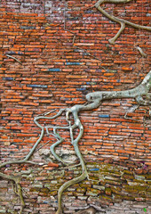 old brick wall and tree roots