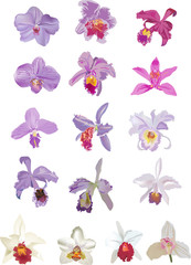 sixteen lilacand white orchids