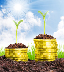 Money growth. Golden coins in soil.