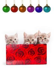 Three little kittens for present