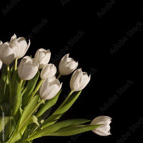 biale-tulipany-czarne-kwadratowe-tlo