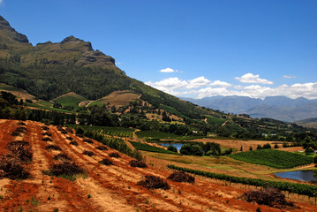 landscape with vineyard(South Africa)