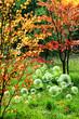 woodland bubbles