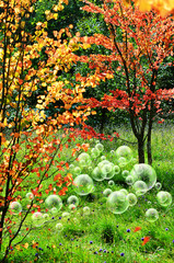 woodland bubbles