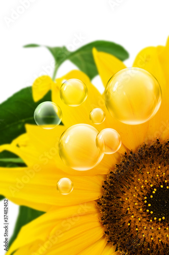 sunflower bubbles