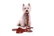 Hund Westie mit vielen Würstchen