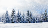 Fototapety Beautiful winter landscape with snow covered trees